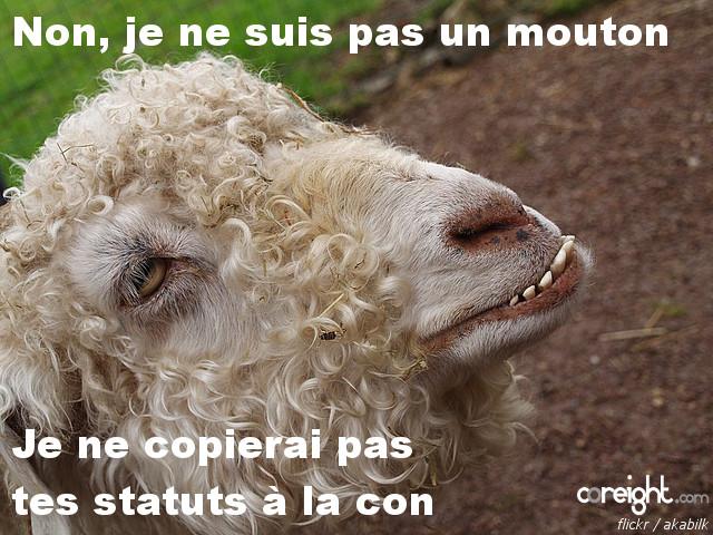 Facebook rumeur mouton
